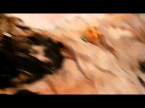 Xxx Mp4 Sally S Christmas Song 3gp Sex