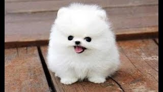 Top 10 Funny Puppies - A Cute Puppy Videos Compilation 2017