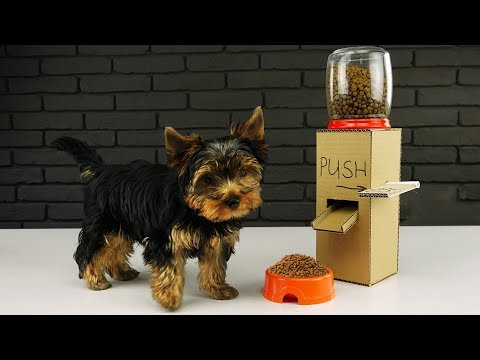 Xxx Mp4 DIY Puppy Dog Food Dispenser From Cardboard At Home 3gp Sex