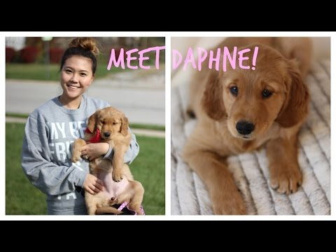 VLOG: Daphne's First Day at Home♥ | ANGELLiEBEAUTY