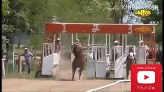 حوادث سباق الخيول - مؤلم بعض الشئ