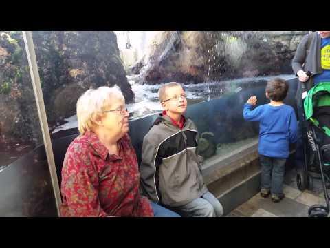 Xxx Mp4 Jonathan And Aunti At The Aquarium 3gp Sex