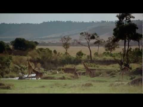 África El Serengueti