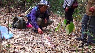Hmoob - Mus zov Ntsooj. Hunting jungle rat. (1080p.HD)