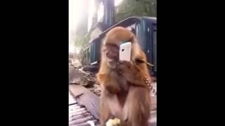 Funny monkey kata laga🐒🐒🐒🐒