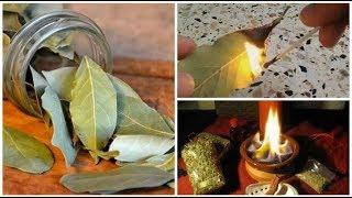 هل تعلم الفوائد العظيمة لحرق ورق الغار في منازلكم.. رائع جدا!