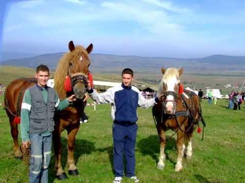 Concurs de tractiune si calarie cu cai Micesti 2006