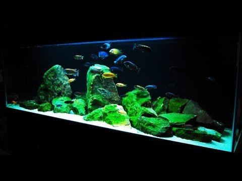 How to Set up an African Cichlid Tank Step by Step Guide