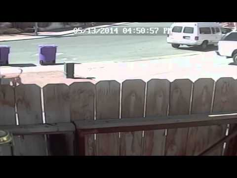 Cat Fights Off Dog Attacking Little Boy   My Cat Saved My Son