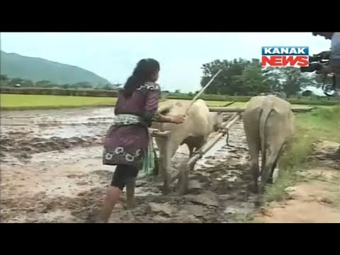 Xxx Mp4 College Girl Helps Father In Ploughing Farmland In Ganjam 3gp Sex