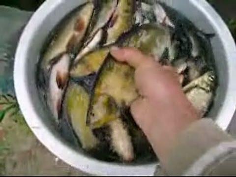 рыбалка ятерями как ловить ятерами