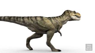 DINOSAURS - T-Rex 3D Animation Walk Cycle RenderTest
