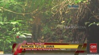 Penampakan Seekor Macan Tutul Berburu Mangsa