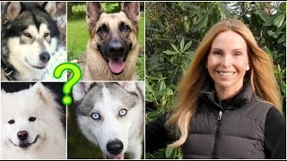 WOLFDOGS - WHICH TYPE TO GET?