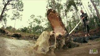 Paul Saves One Angry 11-Foot Gator | Gator Boys
