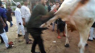 Big boil Ek Lathi te uriye dilo amader ek choto vai ke.