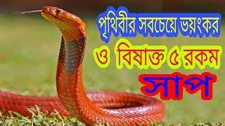 World most Top 5 Terrible Venomous Snake !! bangla video