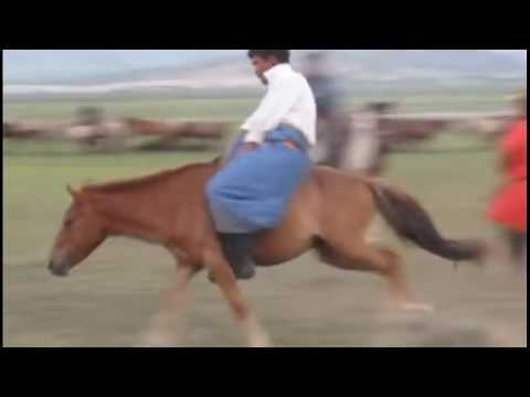 Xxx Mp4 The Wrong Way To Start A Horse Mongolian Horse Training 3gp Sex