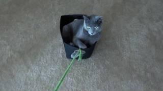 Silvy Kitten Riding Around In A Basket LOL Cat