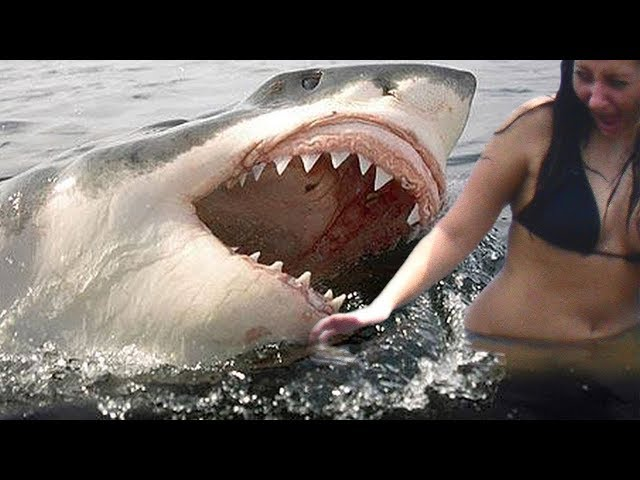 Top 10 DEADLIEST Shark Attacks
