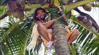 coconut زراعة جوز الهند في الصحراء