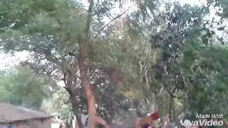 Piya Milal pardhanwa