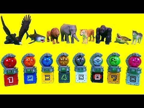 Xxx Mp4 파워레인저 갤럭시포스 스타볼 Vs 애니멀포스 미니 큐브 12345678 토미카 애니멀시리즈 큐브 동물 장난감 Power Rangers Cube Figures Toy 3gp Sex