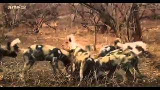 ☛☛ Documentaire Animalier documentaire complet national geographic ☚☚