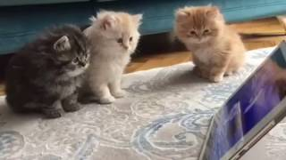 Cute Cats watching Cartoons