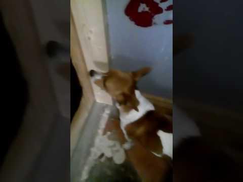 X dog