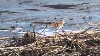Incredible Wetlands - IMPA Award Winner