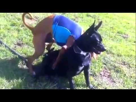 Xxx Mp4 Jack N Black Dog S Safe Sex Escapade 3gp Sex