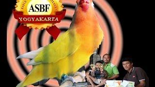 Hoby Burung : Menengok Love Bird Ngekek Panjang Milik Asbf Yk Download Mp3 Mp4 3GP HD Video