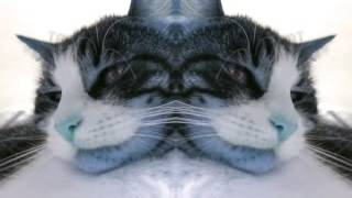 Check me out I'm a Cat!!