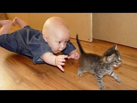 Xxx Mp4 Babies Annoying Cats – Funny Baby Amp Cat Compilation 3gp Sex