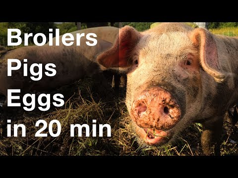 Raise 3 Types of Livestock in 20 Minutes a Day