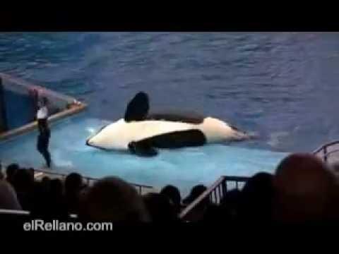 La Orca Asesina
