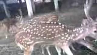 Comilla zoo in Bangladesh..SABIR.3gp