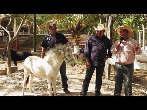 Equino Granja de Caballos Miniatura y Caballos Ponis