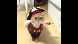 Eric Chasalow - Hanging in the Balance (w/ cute pirate kitten)