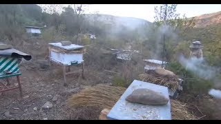 صراع على عسل مستخرج من نحل قاتل ومقاوم للأمراض
