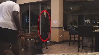 8 Truly Shocking Dogs Protecting From Intruders Caught On Video!