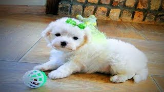 Fuzzy Pets 😍 Cute Fuzzy Pets Playing (Part 1) [Funny Pets]