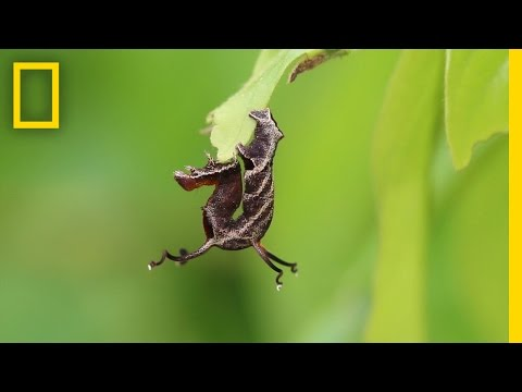 Watch How This Caterpillar Reacts to Loud Noises National Geographic