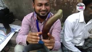 মৌলভীবাজার সবজি মার্কেট | Moulvibazar Vegetable Market. সাবস্ক্রাইব করুন