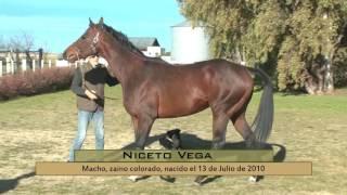 CABALLOS HARAS MELIPAL - NICETO VEGA Y MAHI MAHI