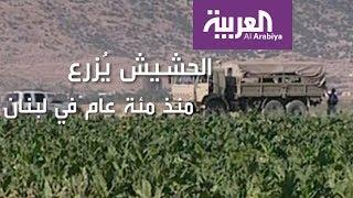 كل ما يجب أن تعرفه عن مشروع تشريع الحشيش اللبناني