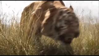 El Libro de la Selva The Jungle Book   Teaser trailer   ESPAÑOL LATINO
