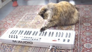 Cat playing piano because lasers.