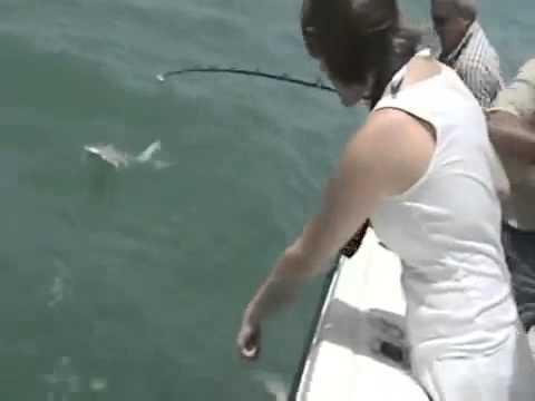 Mero gigante se come un tiburon de un bocado